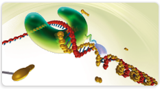 High Fidelity PCR Enzyme Mix