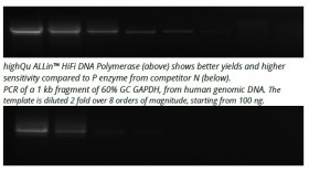 ALLin™ Hifi DNA Polymerase