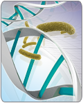 RNase A (from GeneJET™ Plasmid Miniprep Kit)