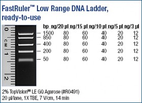 FastRuler™ Low Range DNA Ladder, ready-to-use