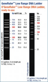 O'GeneRuler™ Low Range DNA Ladder, ready-to-use