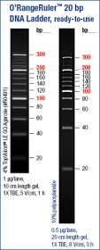 O'RangeRuler™ 20 bp DNA Ladder, ready-to-use