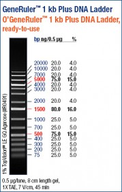 GeneRuler™ 1 kb Plus DNA Ladder, ready-to-use