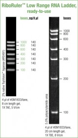 RiboRuler™ Low Range RNA Ladder, ready-to-use