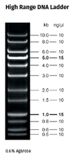 High Range DNA Ladder 500 µl  (130 ng/µl)