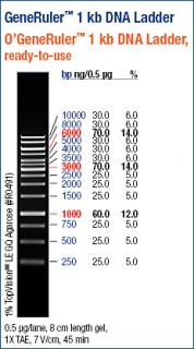 GeneRuler™ 1 kb DNA Ladder, ready-to-use
