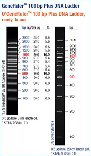 GeneRuler™ 100 bp Plus DNA Ladder