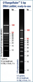 O'RangeRuler™ 5 bp DNA Ladder, ready-to-use