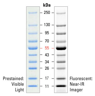 PageRuler Prestained NIR Protein Ladder