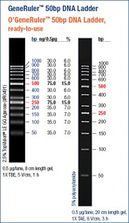 GeneRuler™ 50 bp DNA Ladder, ready-to-use