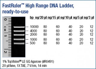 FastRuler™ High Range DNA Ladder, ready-to-use