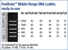 FastRuler™ Middle Range DNA Ladder, ready-to-use