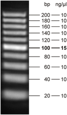 20 bp DNA Ladder